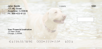 Majestic Yellow Lab Personal Checks | DOG-56
